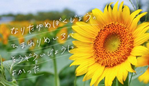成田ゆめ牧場のひまわり迷路が想像以上に良かった!見頃は8月下旬まで!